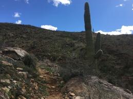 The trail around mile 23.